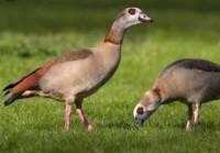 Fauna schade