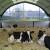 E9,4-12 flexstal droge koeien